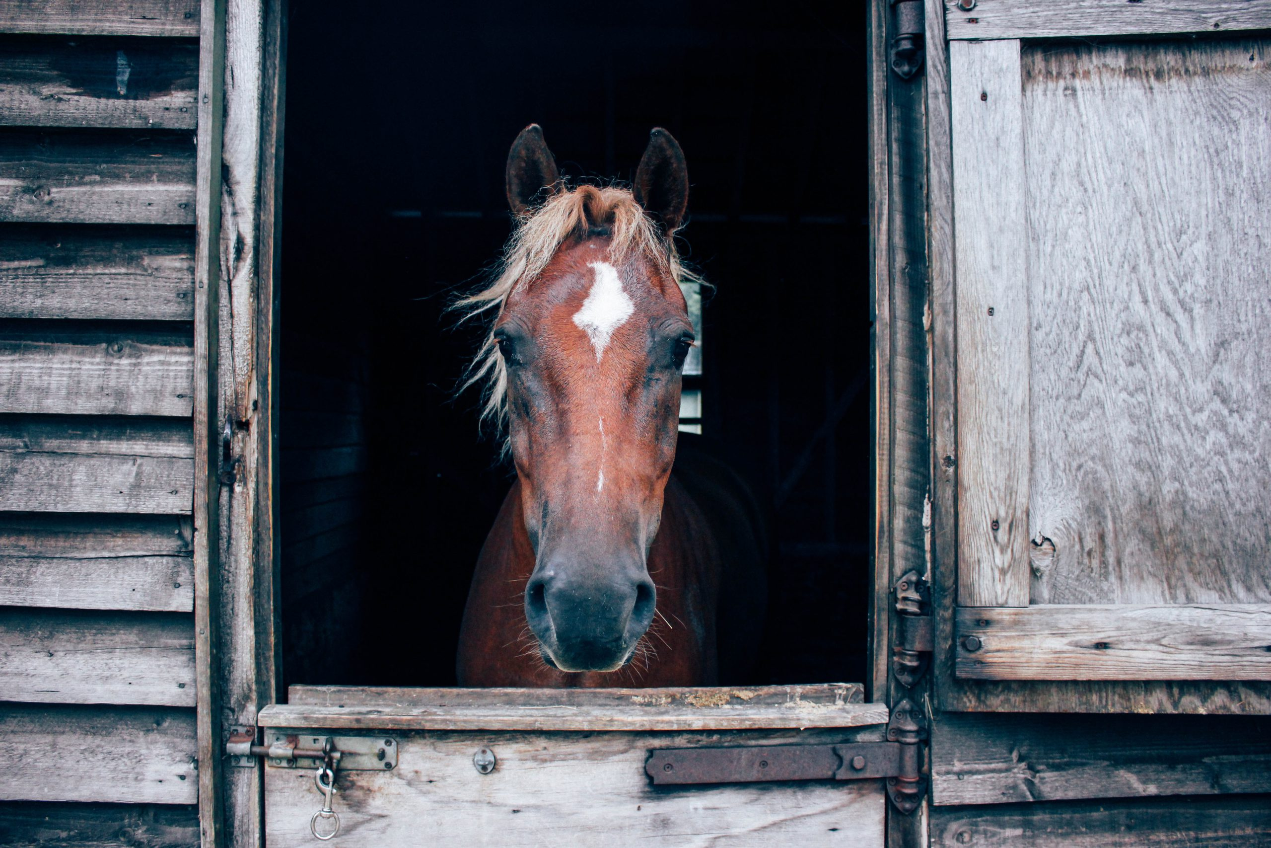 Journaling is a powerful equestrian tool